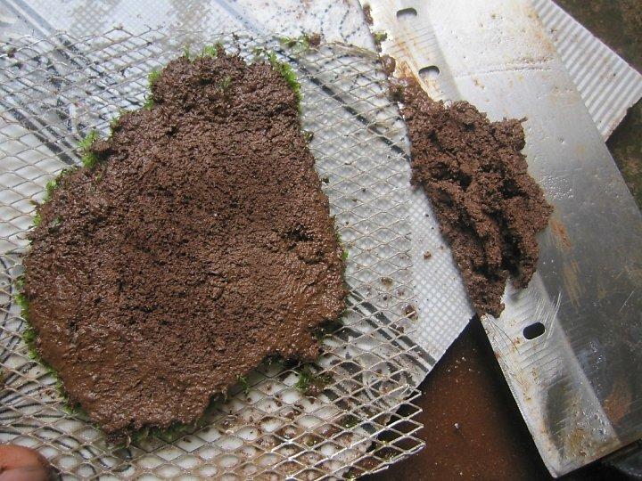 kinh nghiệm xử lý mini fiss thủy sinh bám đất lá cạn -  đặt lên vĩ inox và gọt bớt đất