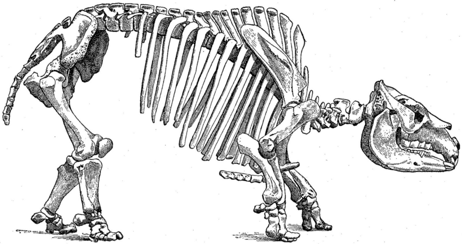 Evolutiebiologie: Die lastige Zuid-Amerikaanse hoefdieren