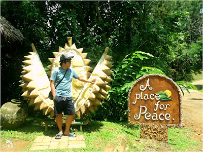 A place for Peace