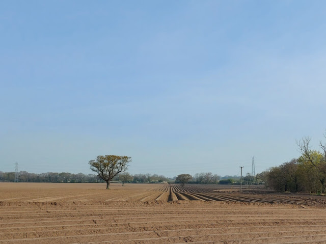 Furrowed lines in a ploughed field with a tree in the centre