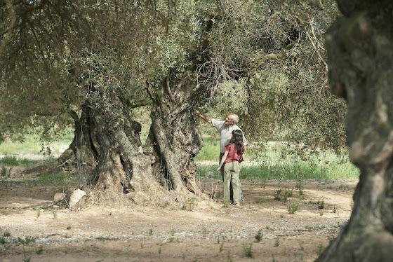 Fotograma: El olivo