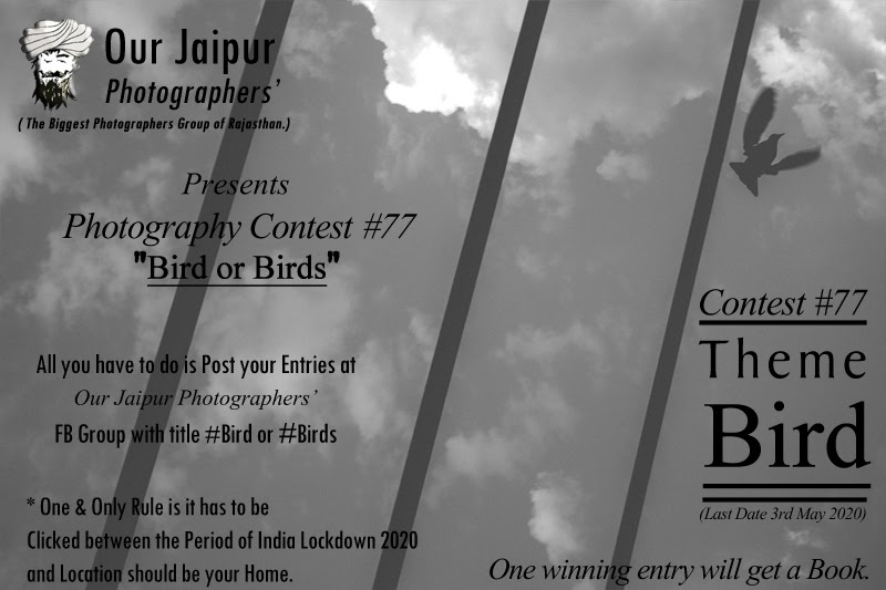 Bird/Birds - Photography Contest