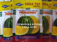 usaha sampingan, usaha rumahan, usaha kecil, jual benih semangka, toko online, toko pertanian lmga agro