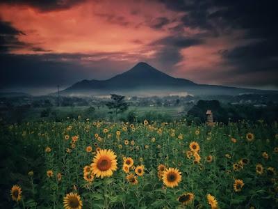 taman adn firdaus pandaan pasuruan