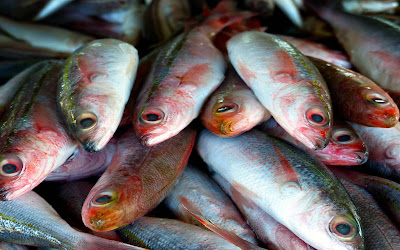 Free food stock photos and high quality images - Fresh Fishes.