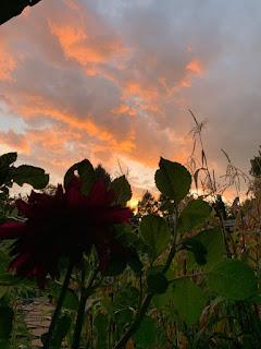 Sunset over the urban farm