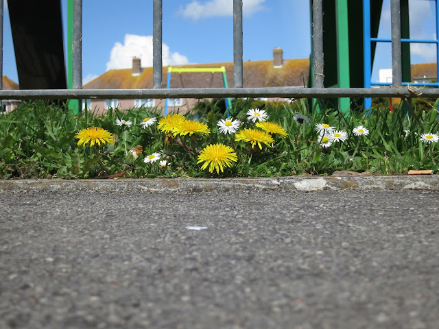 Dandelions and Daisies beneath the railings of a park with children's slide.