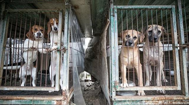 Собак отнимают силой и убивают: Ким Чен Ын запретил держать дома питомцев