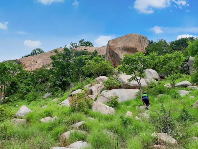 The Upper Palya Betta Trek & beautiful Grasslands