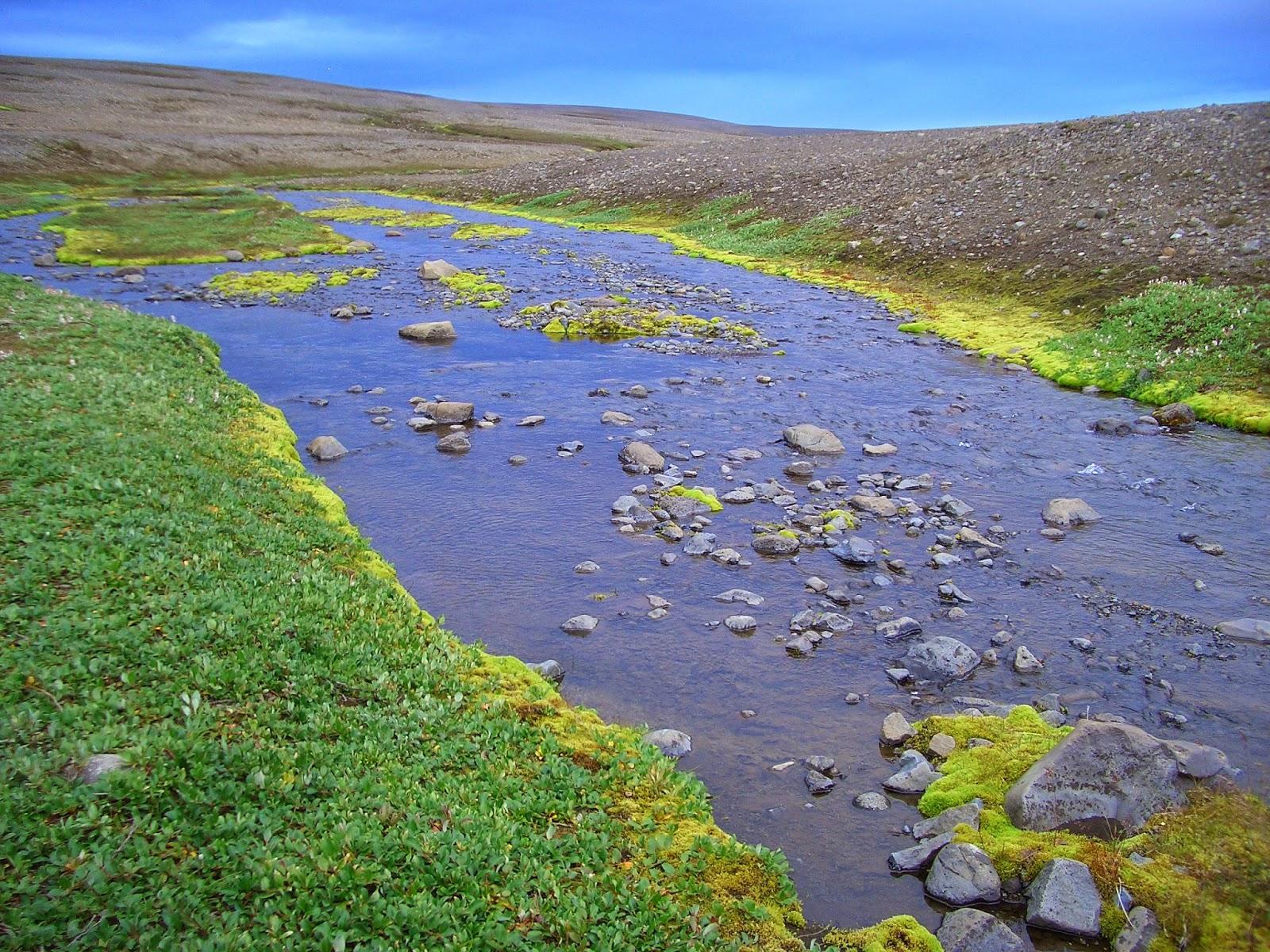 Vida en los eriales mas inhóspitos, Islandia