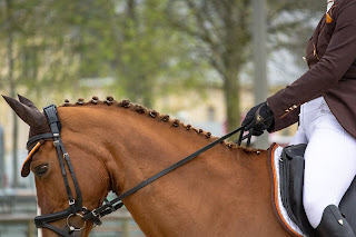 A Chestnut dressage horse being ridden in a dressage competition wearing a brown fly veil and numnah