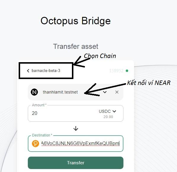 Bridge octopus test net