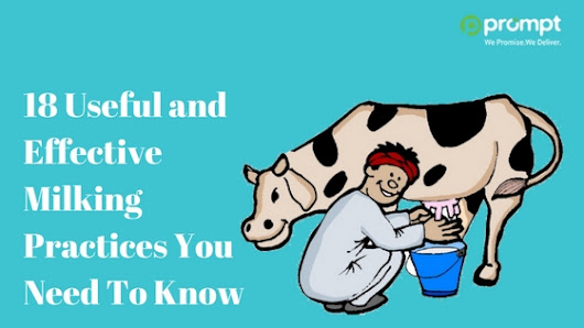 18 Useful and Effective Milking Practices You Need To Know