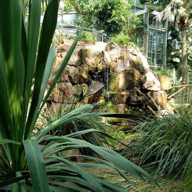 Feuchte Tropen at Palmengarten in Frankfurt
