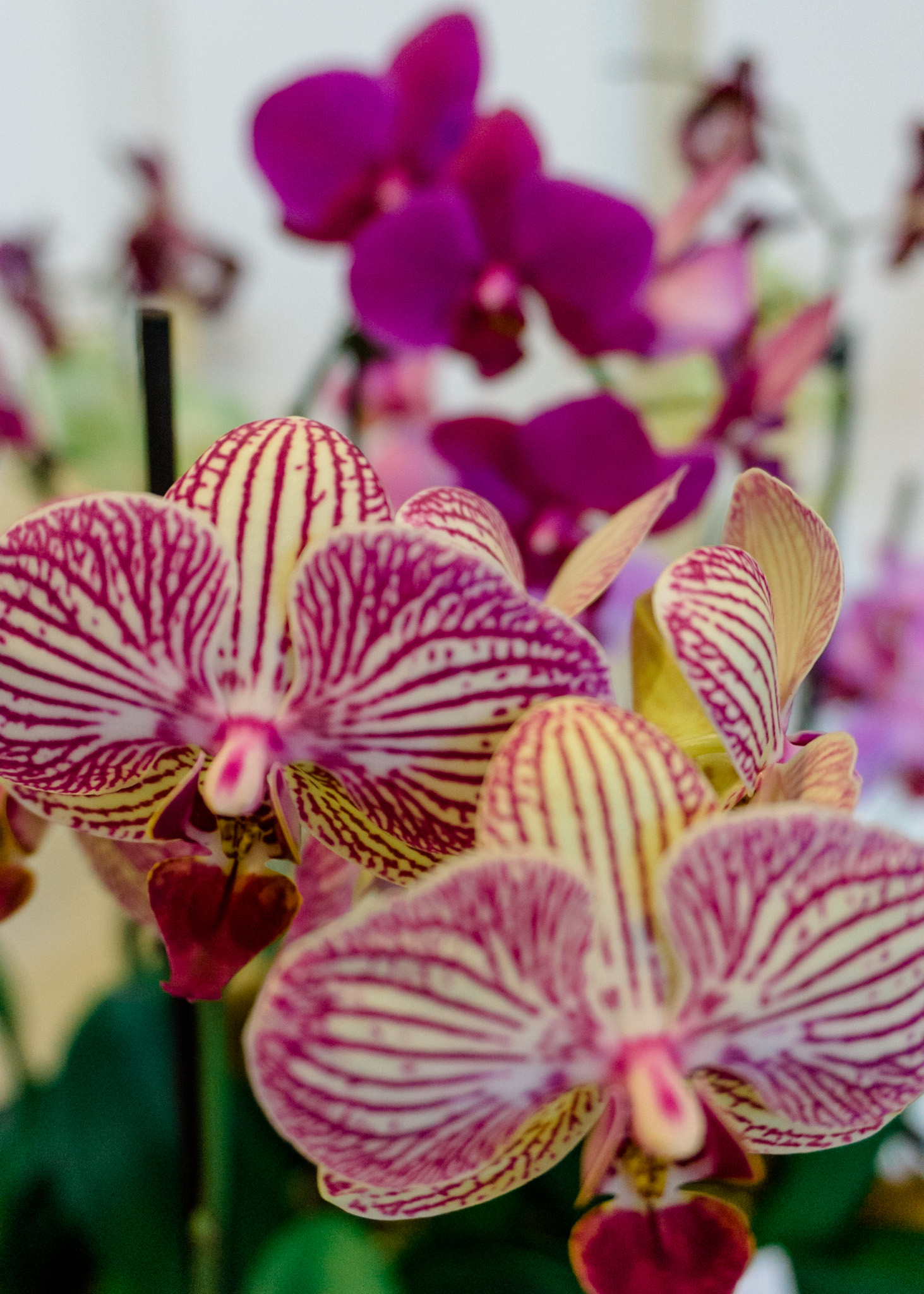 How many kinds of orchids exist?