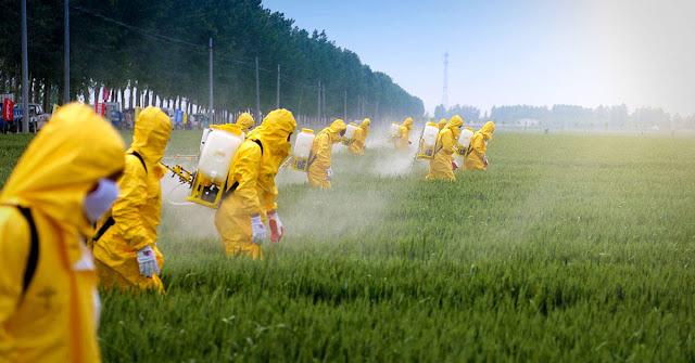 Alemania prohibirá el glifosato para proteger a los insectos