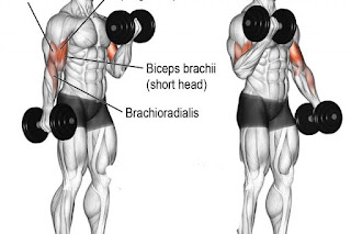 Top 5 Exercises To Build Biceps, Standing Dumbbell Curls
