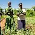 Agriculture: Le Togo bénéficie du soutien chinois consacré à augmenter le rendement de la riziculture