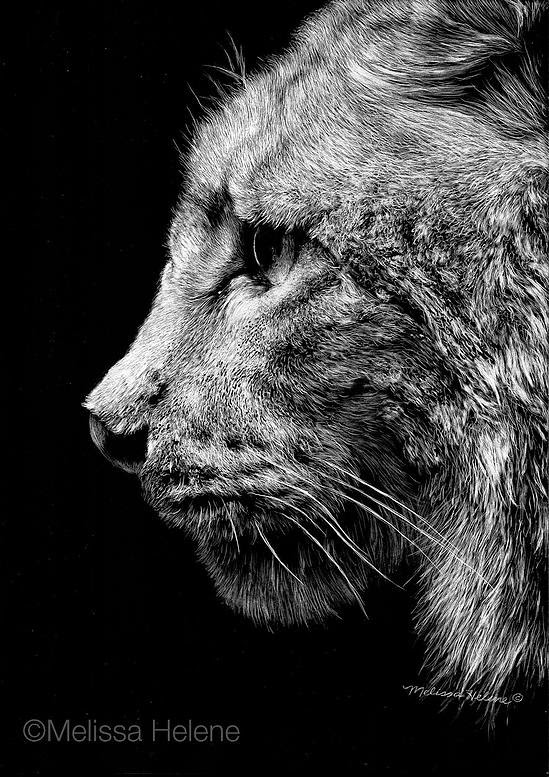 12-Lynx-Melissa-Helene-Amazing-Expressions-in-Scratchboard-Animal-Portraits-www-designstack-co
