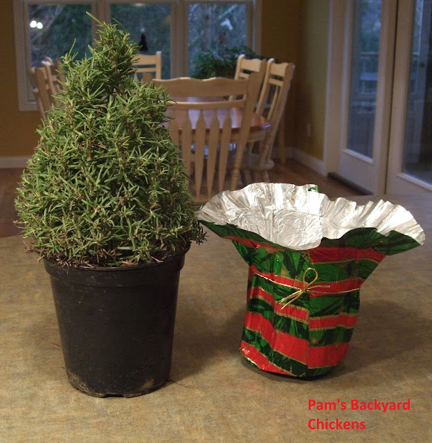 Find out how to bring your rosemary plant indoors and enjoy it for the winter and beyond...