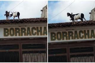 Animais são flagrados andando em cima de telhado de borracharia na Paraíba