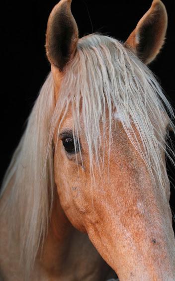 أجمل صور خلفيات خيول 2