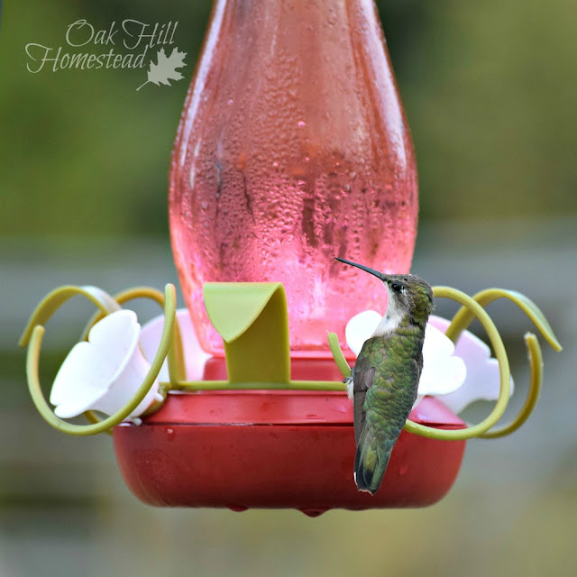 How to attract hummingbirds to your yard.
