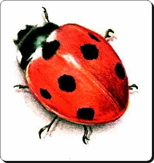 Coccinellids Amazing Facts ,Ladybirds , lady beetles ,Ladybugs Facts