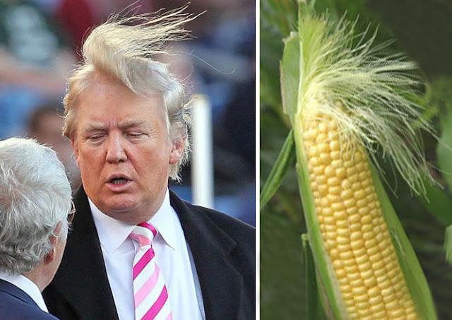 look Donald