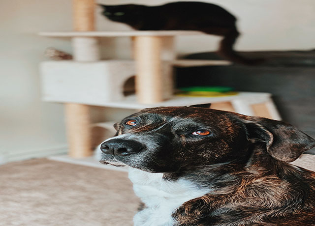 How to Buy Pet Insurance for Your Dog