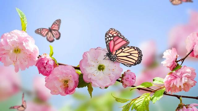 صور خلفيات ورد ملون مع فراشة جميلة