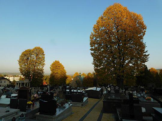 Stary cmentarz z wyniosłymi lipami drobnolistnymi.