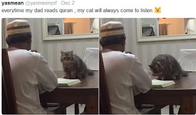 See viral Photos of 'Religious' Cat Who Loves  To Pray