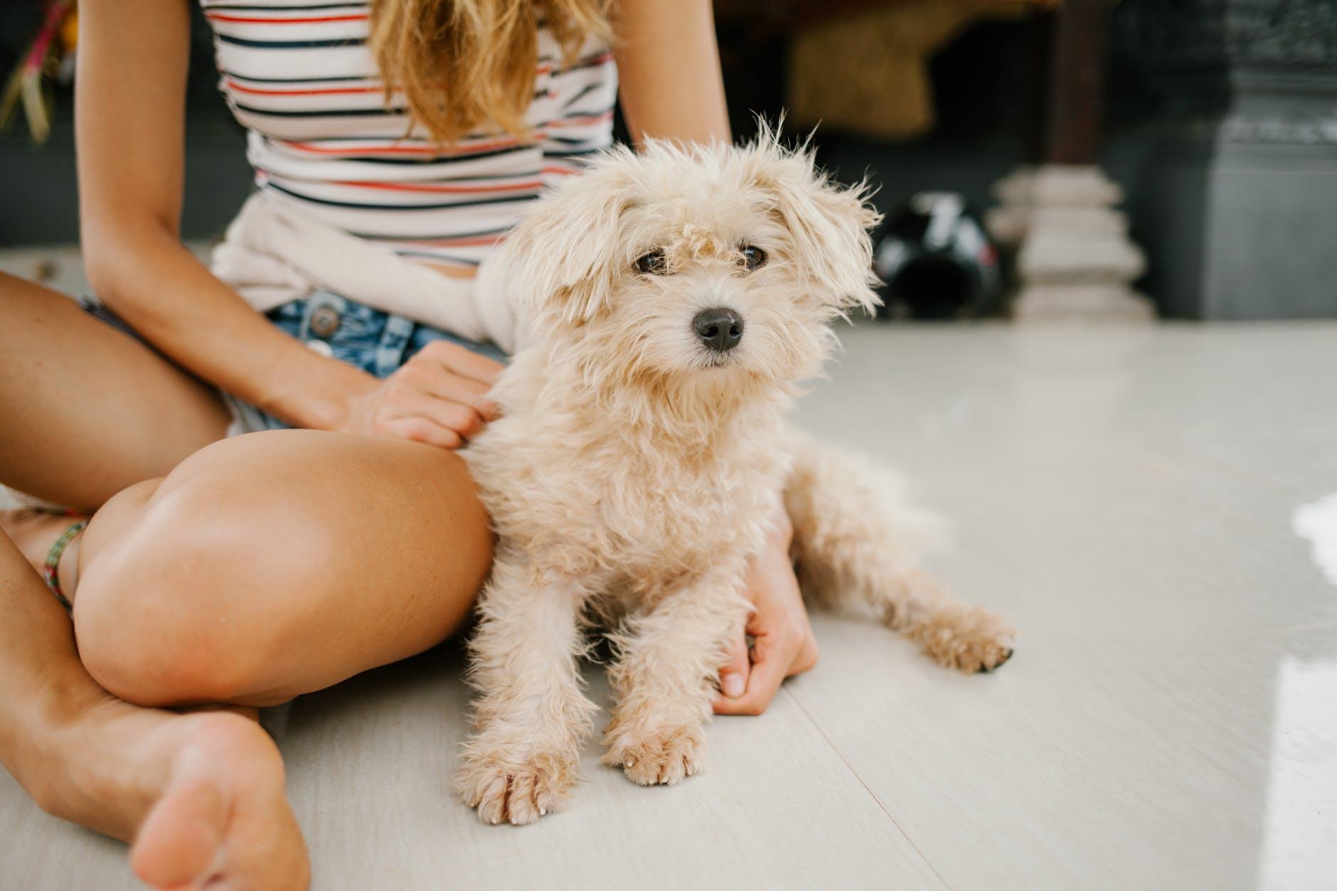 Prendre soin des chiens adoptés