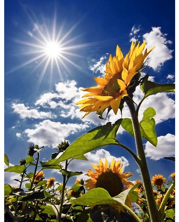 Beautiful Quotes And Inspirational Wallpapers Facebook 21 Sunny Pictures Of Sunflower Angelic Hugs