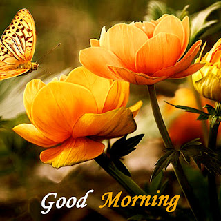 good morning wallpaper for lover, latest images of good morning, good morning images download, gd morning, good morning images in love, gd mrng love image, pic of good morning, good morning photo for lover, good morning hug images, good morning wallpapers, morning images of love, good morning love images for whatsapp, good morning images for whatsapp