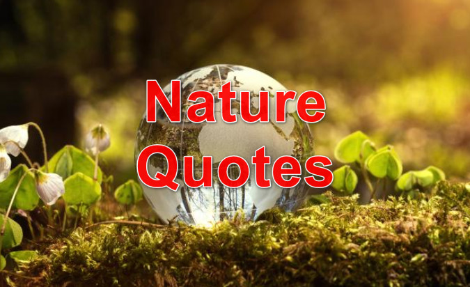 100+ best nature quotes will help you love nature more
