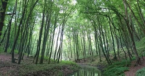 A magyarországi erdők értékeit mutatják be a Szabadság téren