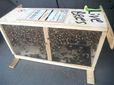 live bees for shipping