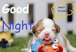 good night cute dog images
