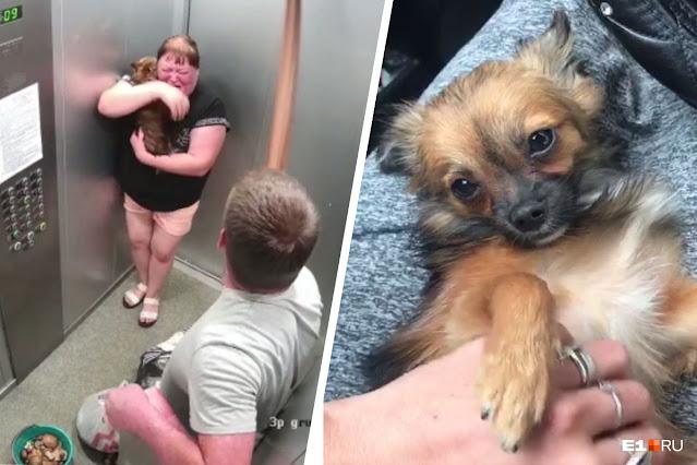 На Урале требуют наказать живодера, жестоко избившего собаку в лифте: Видео!