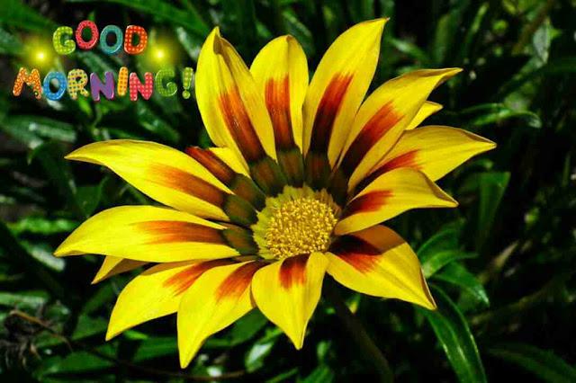 Beautiful yellow flower good morning wishes