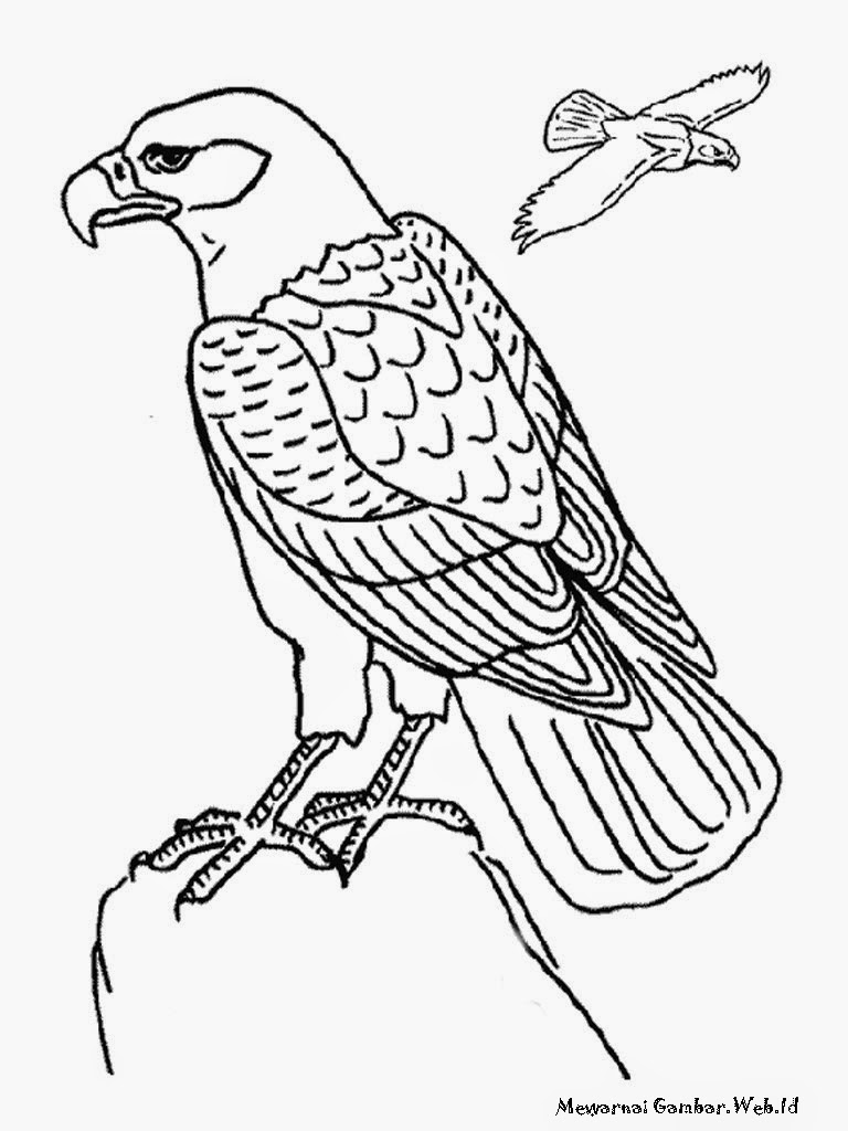 Cara menggambar sketsa burung garuda 28 images wel e