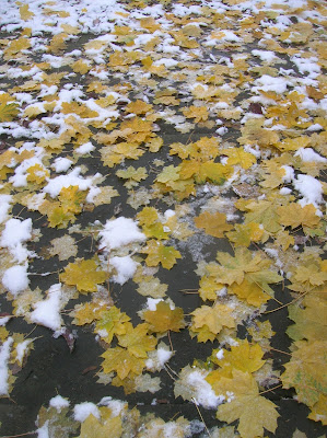 leaves and snow on the pavement