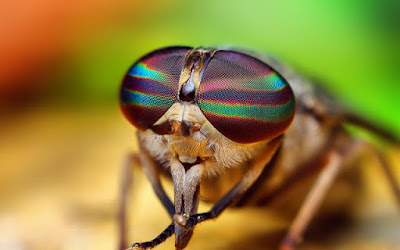 Israel exporta 400 millones de moscas a Europa