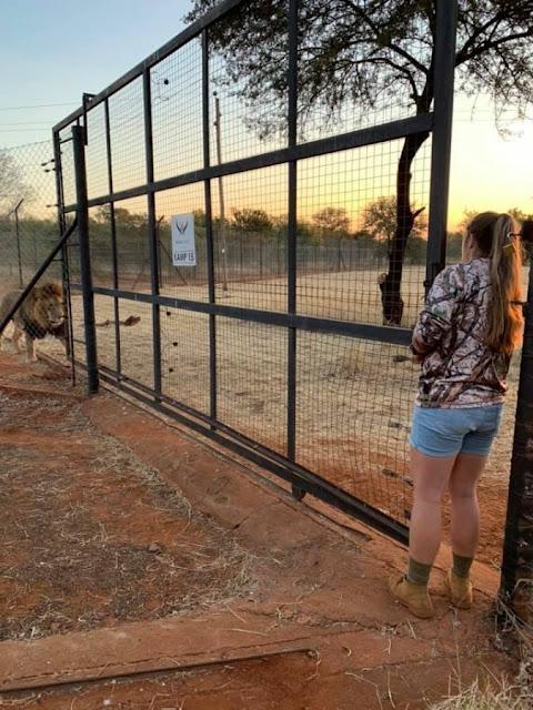 I leoni uccidono una ragazza 21enne in uno zoo sudafricano
