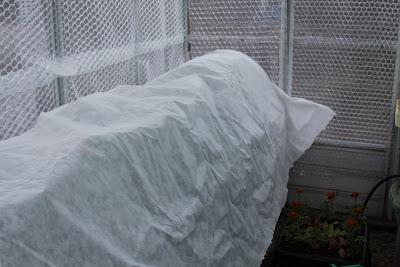 Greenhouse watering