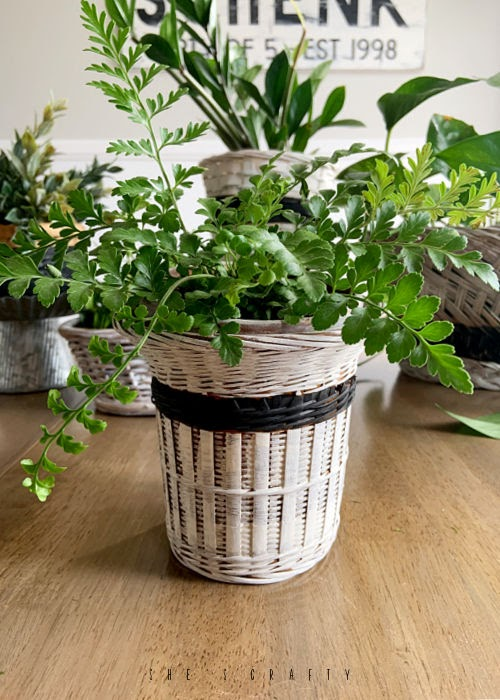 White with black stripe basket planter from thrift store basket
