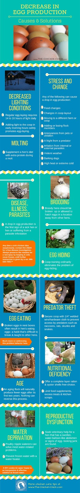Drop in Egg Production: Causes & Solutions via The Chicken Chick®