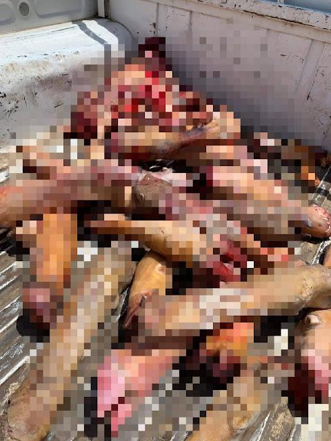 شبح سوهاج يضبط 105 كيلو لحوم فاسدة في حملة للطب البيطري بسوهاج